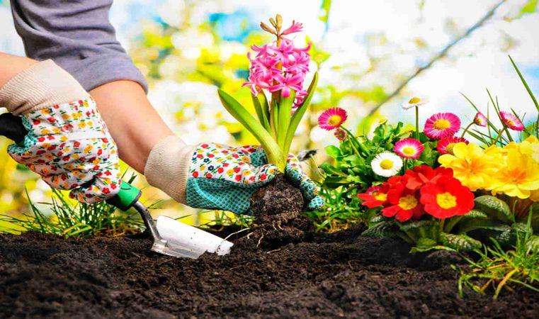 Spygliuočiai – pradedant juos auginti